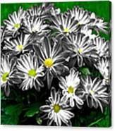 Antique Flowers Canvas Print