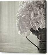 Antique Hydrangea Canvas Print