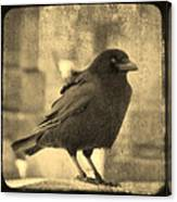 Antique Sepia Crow Canvas Print