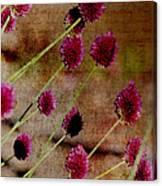 Antique Style Pink Floral Canvas Print