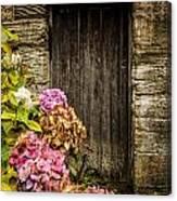 Antique Wooden Door And Hortensia Canvas Print