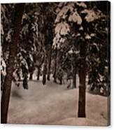 Antique Woodscape Canvas Print