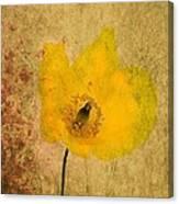 Antique Yellow Flower Canvas Print