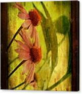 Antiqued Cone Flowers Canvas Print