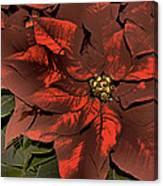 Antiqued Poinsettia Canvas Print