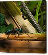 Ants Adventure 2 Canvas Print