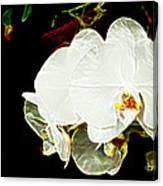 Aos White Orchid 1 Canvas Print