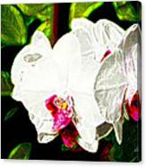 Aos White Orchid 2 Canvas Print