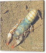 Appalachian Blue Crayfish Canvas Print