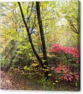 Appalachian Mountain Trail Canvas Print
