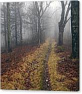 Appalachian Trail Fog Canvas Print