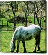 Appaloosa In Pasture Canvas Print