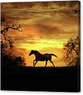 Appaloosa Sunset Canvas Print