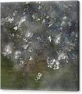 Appelblossoms Canvas Print