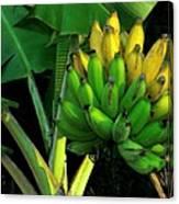 Apple Banana Canvas Print