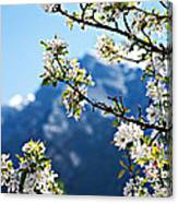 Apple Blossoms Frame The Rockies Canvas Print