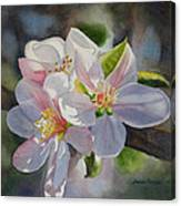 Apple Blossoms In Sunlight Canvas Print
