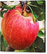 Apple On The Tree Canvas Print
