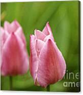 Apple Pink Tulips Canvas Print