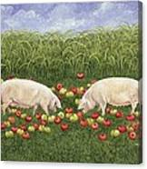 Apple Sows Canvas Print