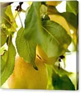 Apple Taste Of Summer 1 Canvas Print