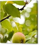 Apple Taste Of Summer 2 Canvas Print