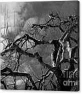 Apple Tree Bw Canvas Print