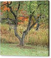 Apple Tree In Autumn Canvas Print