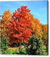 Apple Tree In September Canvas Print