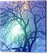 Apple Tree In Winter Fog Canvas Print