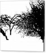 Apple Trees Canvas Print