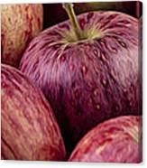 Apples 01 Canvas Print