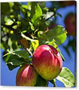 Apples On Tree Canvas Print