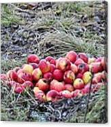 #apples Canvas Print