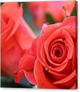 Apricot Beauty Canvas Print