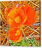 Apricot Globemallow In Vermilion Cliffs National Monument-arizona Canvas Print