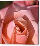 Apricot Rose Canvas Print