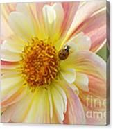 April Heather Dahlia With Ladybug Canvas Print