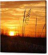 April Morning Grasses Canvas Print