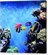 Aquarium 1 Canvas Print
