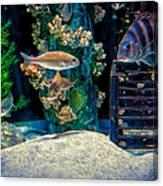 Aquarium Art Canvas Print
