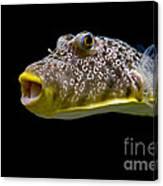 Aquarium Fish Canvas Print
