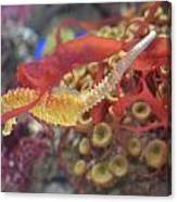 Aquarium Fun Canvas Print