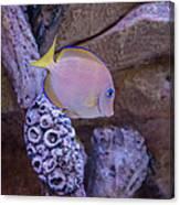 Aquarium Impression Canvas Print