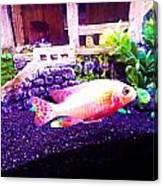 Aquatic Home Canvas Print