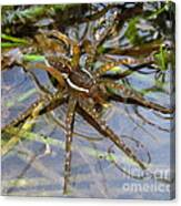 Aquatic Hunting Spider Canvas Print