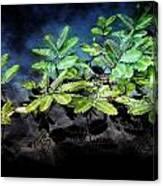 Aquatic Leaves Canvas Print
