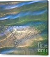 Aquatic Motion Canvas Print