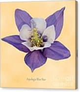 Aquilegia 'blue Star' Canvas Print