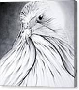 Arabian Falcon Canvas Print
